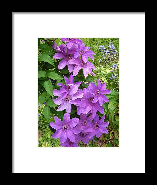 Flowers Framed Print featuring the photograph Lavender Beauty by Jeanette Oberholtzer