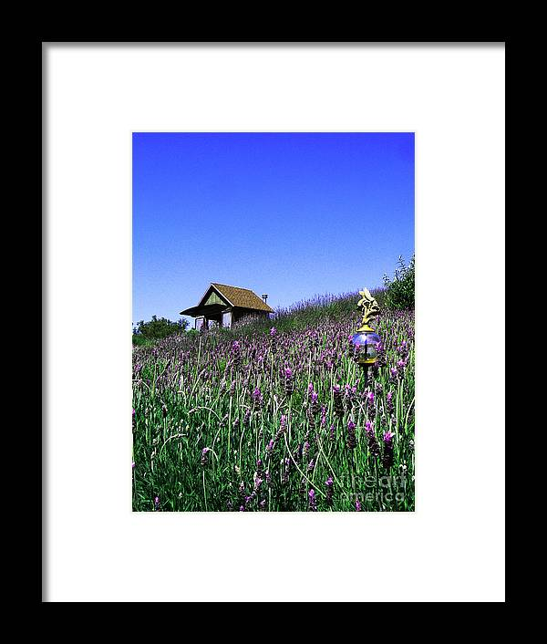 Lavender Farm Framed Print featuring the photograph Lavender Farm by Helen Xiao