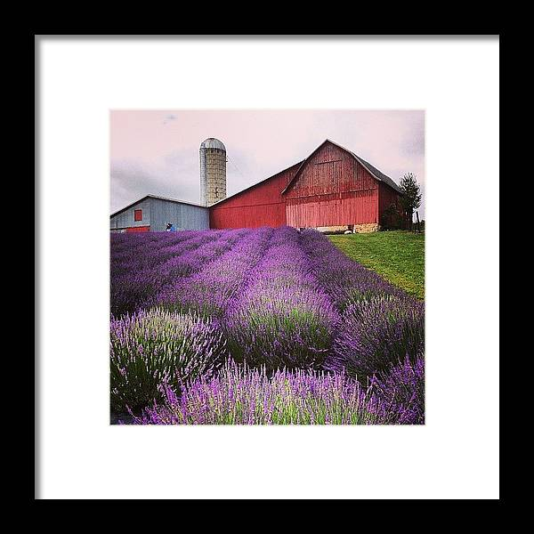 Landscape Framed Print featuring the photograph Lavender Farm Landscape by Christy Beckwith