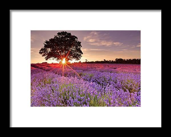 Scenics Framed Print featuring the photograph Lavender Field by Sandra Kreuzinger