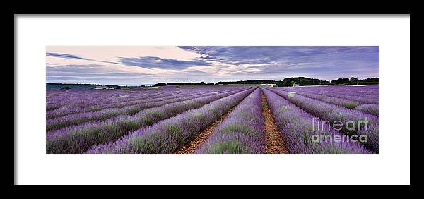 Lavender Framed Print featuring the photograph Lavender Fields by Rod McLean