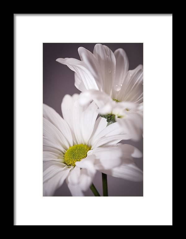 Flowers Framed Print featuring the photograph Lavender Twins by Janice Sullivan
