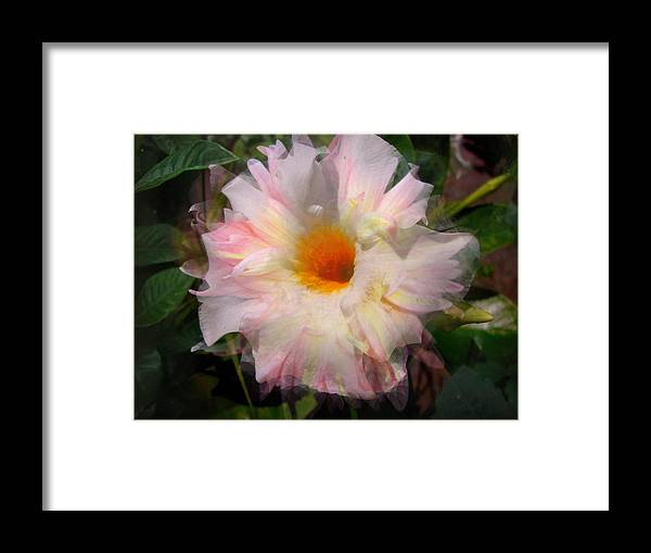Flower Framed Print featuring the photograph Layered by Pepsi Freund