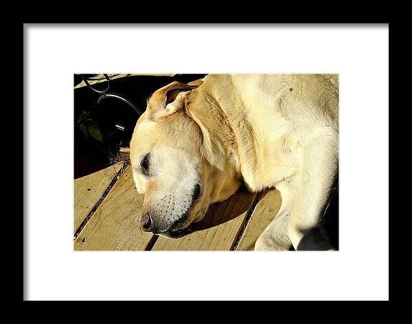 Farm Dog Framed Print featuring the photograph Lazy Farm Dog by SC Pierce