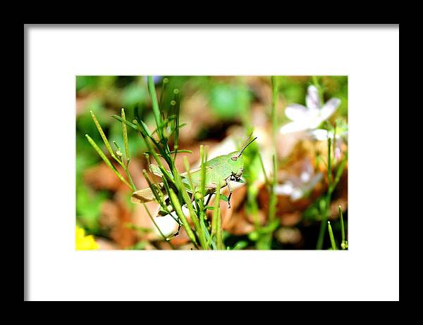 Grasshopper Framed Print featuring the photograph Lazy Grasshopper by Candice Trimble