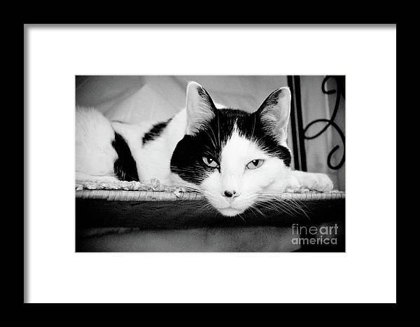 Andee Design Cat Framed Print featuring the photograph Le Cat by Andee Design