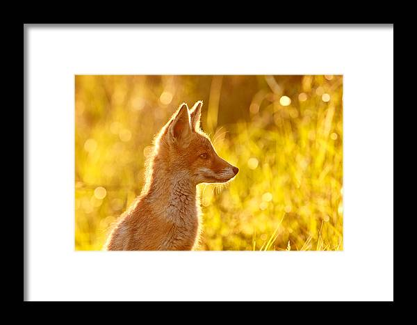 Fox Framed Print featuring the photograph Le P'tit Renard by Roeselien Raimond