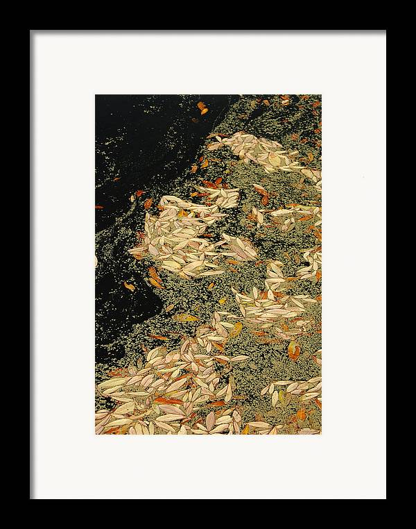 Klimt Framed Print featuring the photograph Leaf Abstract Ode To Klimt by Suzanne Gaff