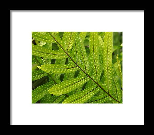 Leaf Framed Print featuring the photograph Leaf by Belinda Greb