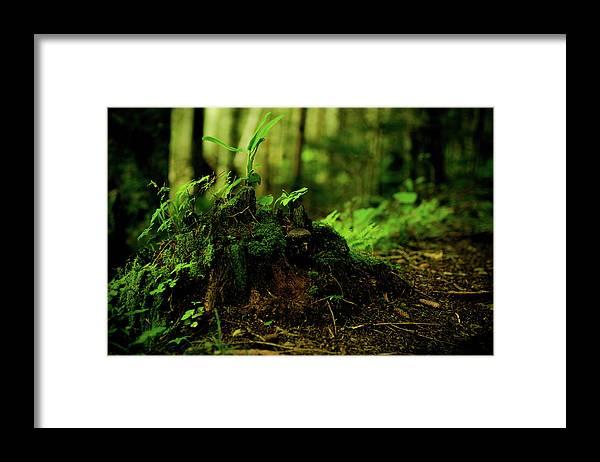 Hokkaido Framed Print featuring the photograph Leaf Bud by Plasticboystudio