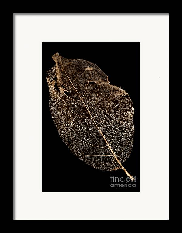 Background Framed Print featuring the photograph Leaf Lace by Anne Gilbert