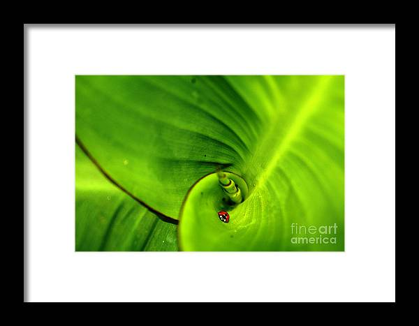 Leaf Life Framed Print featuring the photograph Leaf Life by Sourabh Sharma