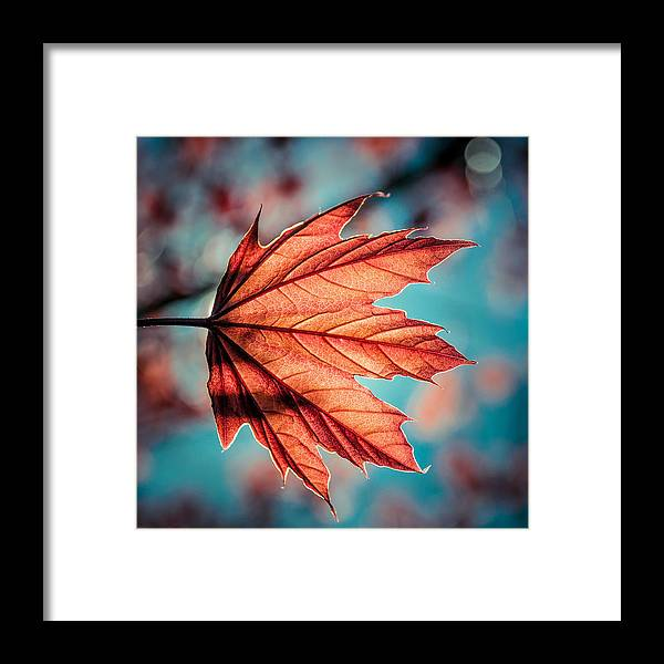 Nature Framed Print featuring the photograph Leaf Of Light by David McCandless