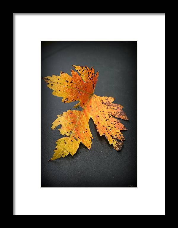 Nature Framed Print featuring the photograph Leaf Portrait by Linda Sannuti