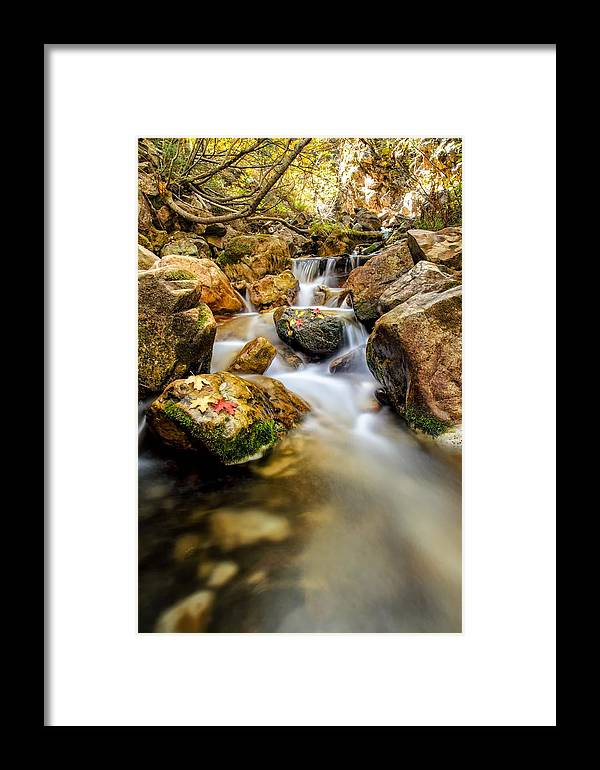 Waterfall Framed Print featuring the photograph Leafs Resting On A Rock by Mitch Johanson