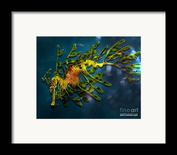 Leafy Sea Dragon Framed Print featuring the photograph Leafy Sea Dragon by Artist and Photographer Laura Wrede