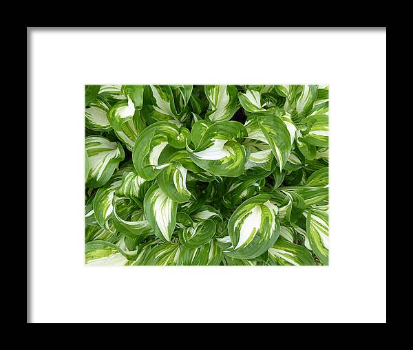 Leaves Framed Print featuring the photograph Leafy Swirl by Laurie Tsemak