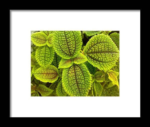 Leaf Framed Print featuring the digital art Leafy by Syed Suhaib Pasha