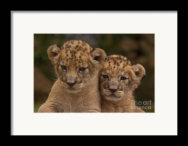 Adorable Framed Print featuring the photograph Lean On Me by Ashley Vincent