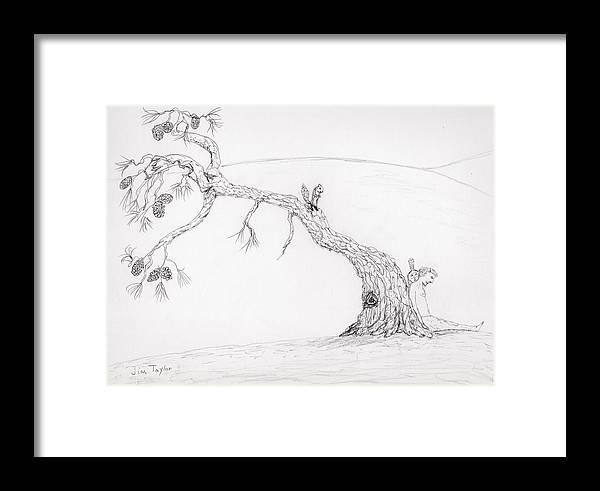 Jim Taylor Framed Print featuring the drawing Leaning Pine by Jim Taylor