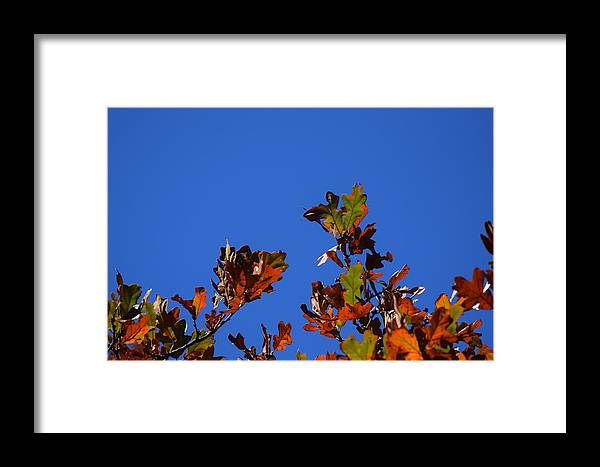 Leaves Framed Print featuring the photograph Leaves 2 by Lawrence Hess