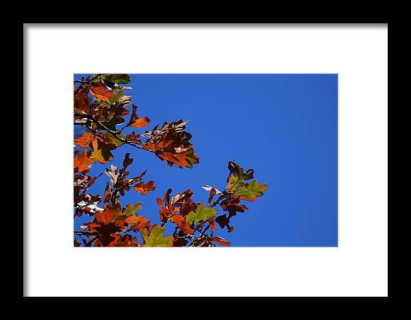 Leaves Framed Print featuring the photograph Leaves 3 by Lawrence Hess