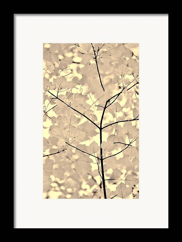 Leaf Framed Print featuring the photograph Leaves Fade To Beige Melody by Jennie Marie Schell