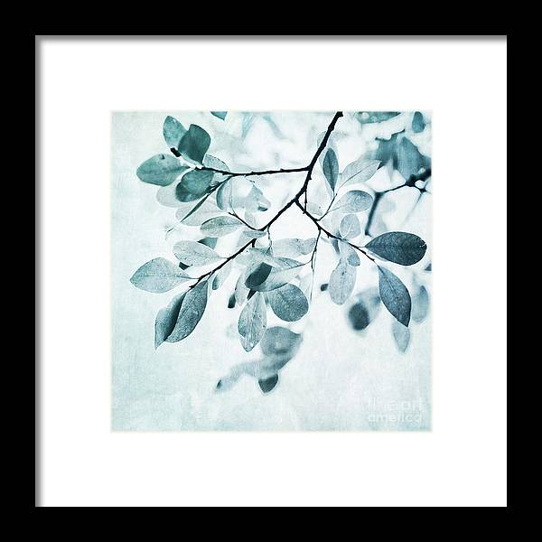 Foliage Framed Print featuring the photograph Leaves In Dusty Blue by Priska Wettstein