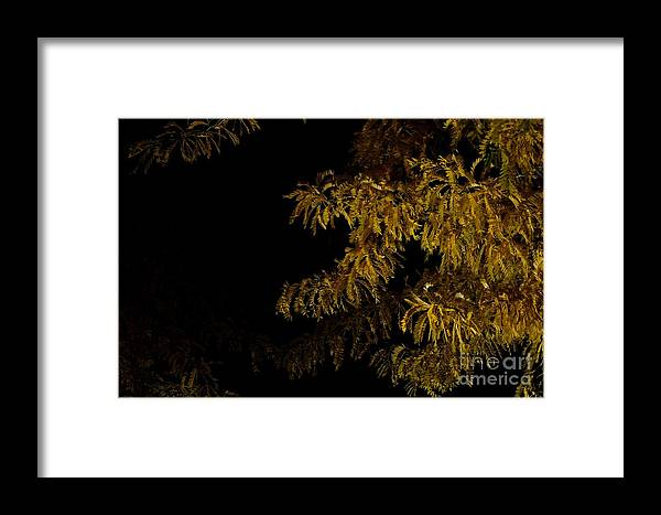 Phil Dionne Photography Framed Print featuring the photograph Leaves In The Night I by Phil Dionne