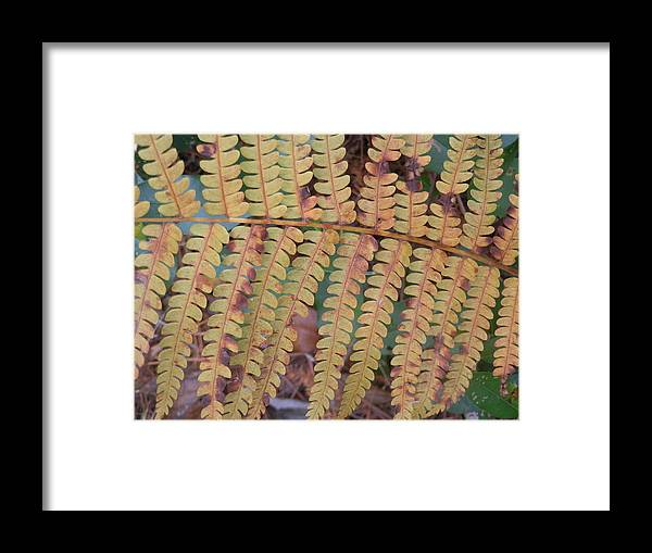 Forest Framed Print featuring the painting Leaves by Ione Hedges