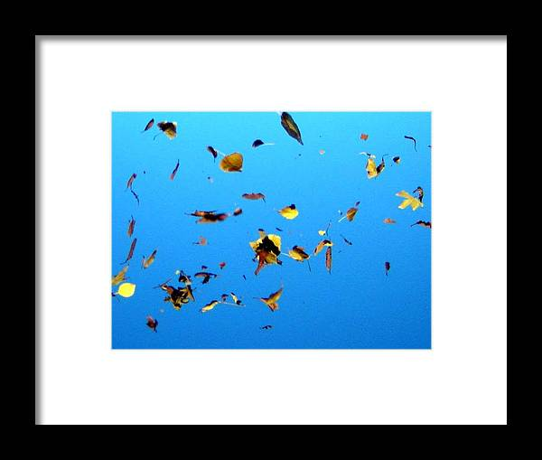 Leaves Framed Print featuring the photograph Leaves by Jacqualine Butterfield