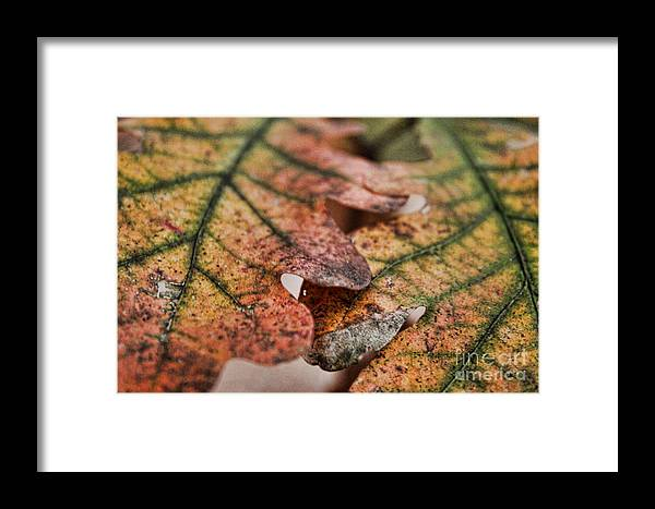 Trees Framed Print featuring the photograph Leaves by Kristy Ollis