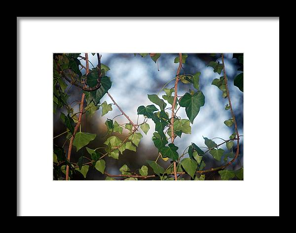 Leaves Framed Print featuring the photograph Leaves by William Copeland