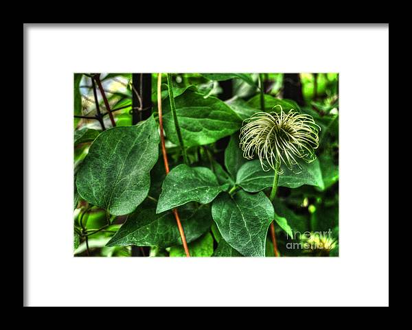 Flowers Framed Print featuring the photograph Leftover by Chris Fleming