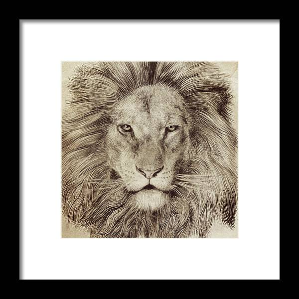 Lion Framed Print featuring the drawing Leo by Eric Fan