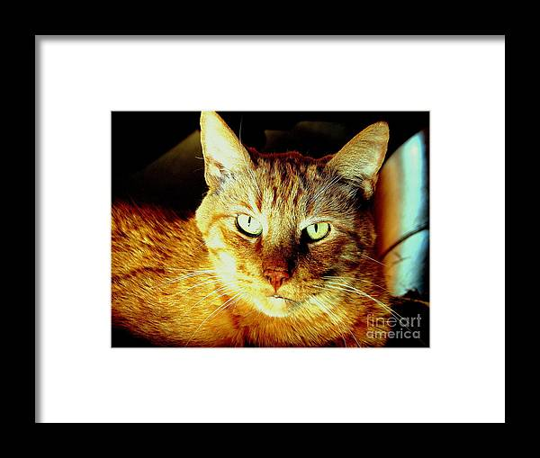 Cat Framed Print featuring the photograph Lester The Molester by Jodie Scheller
