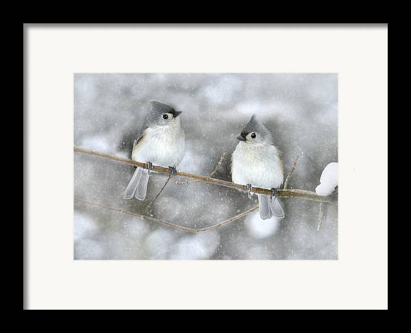 Bird Framed Print featuring the photograph Let It Snow by Lori Deiter