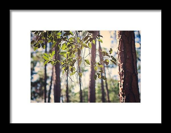 Sunlight Framed Print featuring the photograph Let Your Light Shine Through by Maria Robinson