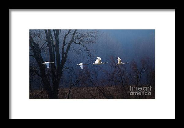 Wild Bird Framed Print featuring the photograph Let Your Spirit Fly by Rima Biswas