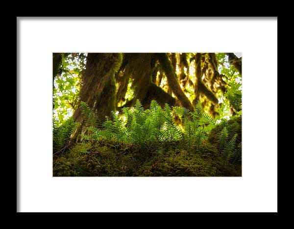 Hoh Rain Forest Framed Print featuring the photograph Licorice Fern by Rich Leighton