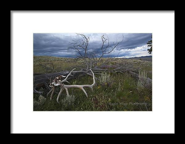 Nature Framed Print featuring the photograph Life And Death by Evan Olson
