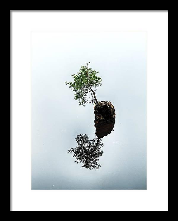 Life on the Batsto by Dawn J Benko