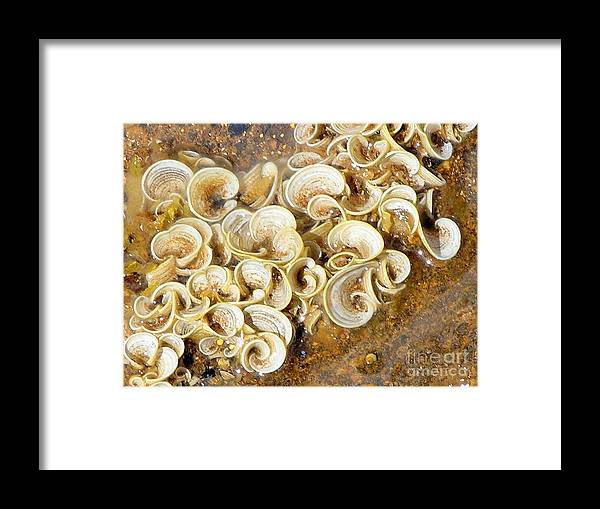 Sea Life Framed Print featuring the photograph Life On The Rocks by Mary Deal