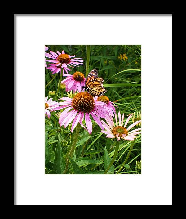 Purple Coneflower Framed Prints Framed Print featuring the photograph Life's Rare Jewels by Ann Willmore