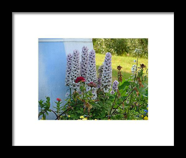 Flowers Framed Print featuring the photograph Light Blue by Lew Davis