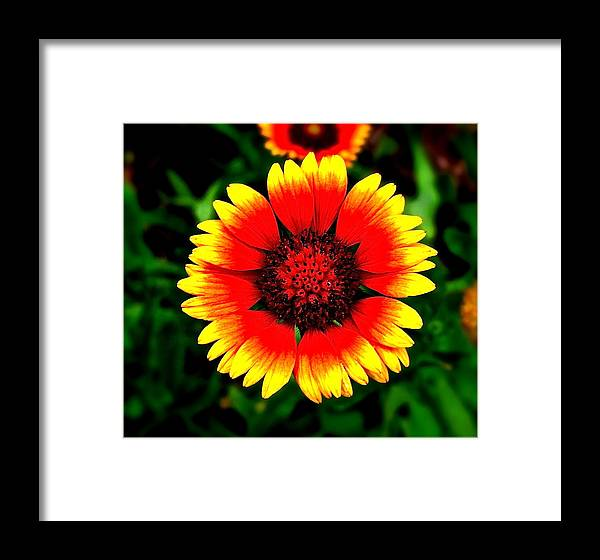 Flower Framed Print featuring the photograph Light My Fire by Martin S Gold