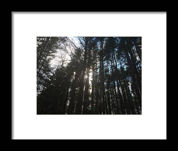 Nature Framed Print featuring the photograph Light Through The Trees by Dana Bucy Miller