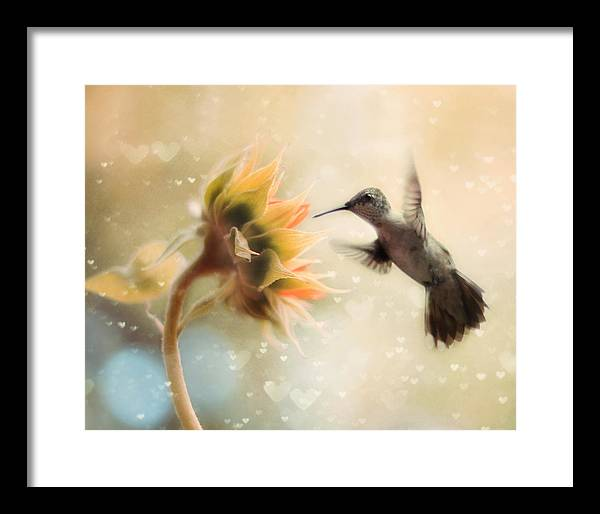 Hummingbird Framed Art Prints | Fine Art America