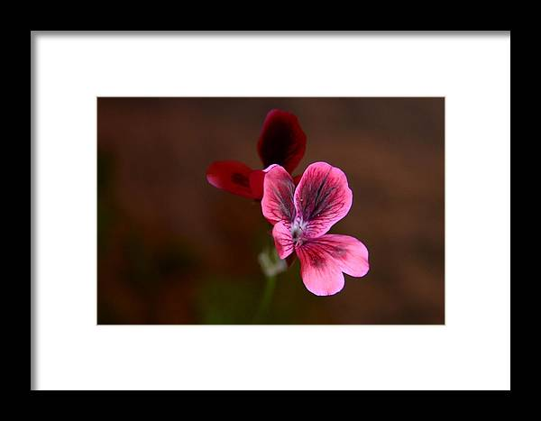 Landscape Framed Print featuring the photograph Liliana by Rami Khoury