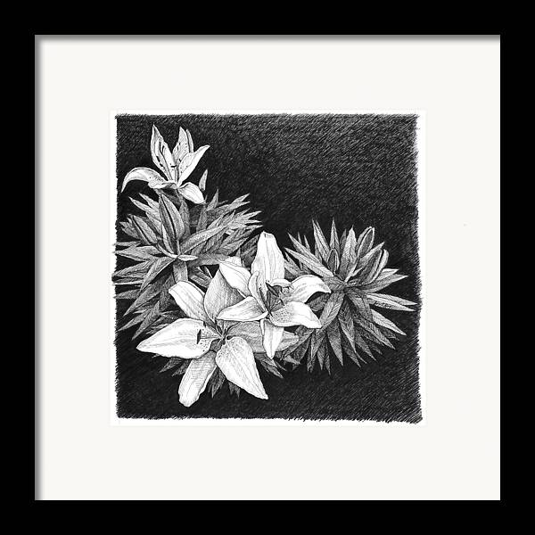 Lilies Framed Print featuring the drawing Lilies In Pen And Ink by Janet King